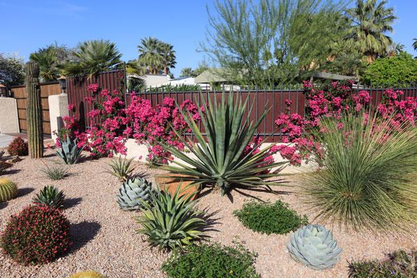 How To Start Xeriscaping With Water Wise Plants